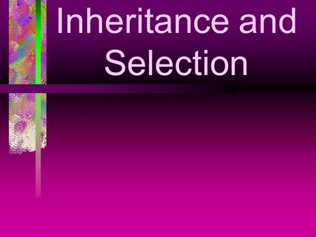 Inheritance and Selection. WALT Offspring are similar but not identical to their parents. Some characteristics are inherited These variations occur in.