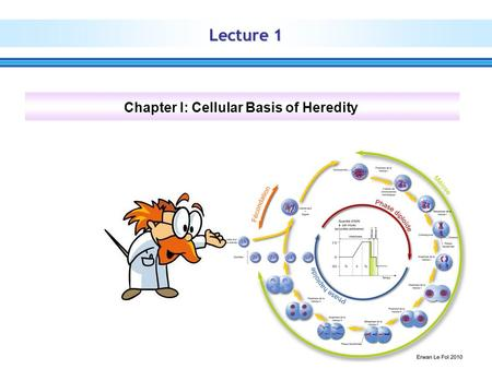 Lecture 1 Chapter I: Cellular Basis of Heredity. The cell  The cell is the functional basic unit of life  There are two types of cells: eukaryotic and.