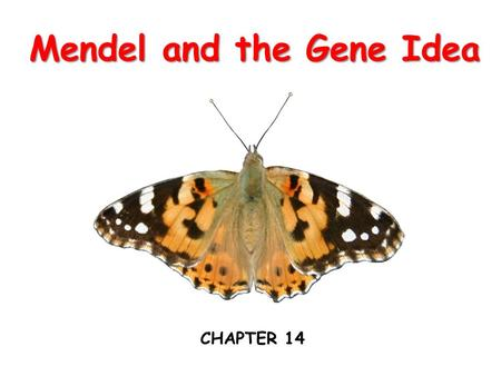 Mendel and the Gene Idea CHAPTER 14. What genetic principles account for the transmission of traits from parents to offspring?