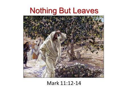 Nothing But Leaves Mark 11:12-14. Jesus and the Cursing of the Fig Tree This story is located during Jesus' final week in Jerusalem before the cross (Mt.