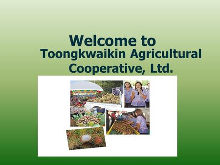 Welcome to Toongkwaikin Agricultural Cooperative, Ltd.