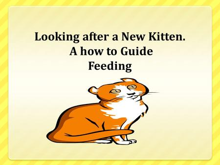 Looking after a New Kitten. A how to Guide Feeding.