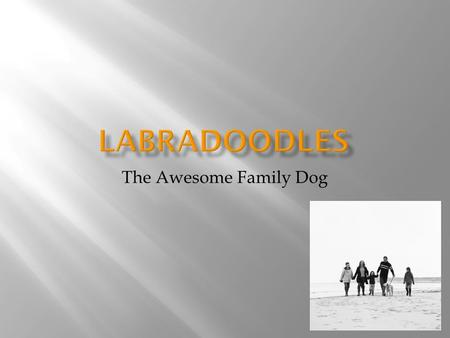 The Awesome Family Dog. Copyright 2012 by Lisa Birdsbill  They are a cross breed, so you won't know what you get until you see it  They are very gentle,