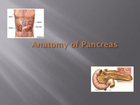 Anatomy of Pancreas.  Identify location of the Pancreas  Recognize important anatomical relations to the pancreas  Identify different parts of the.