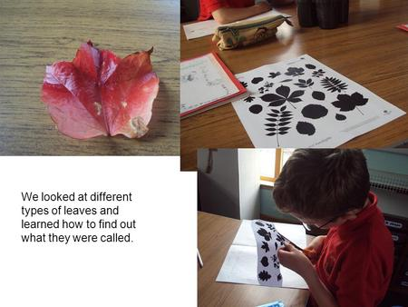 We looked at different types of leaves and learned how to find out what they were called.