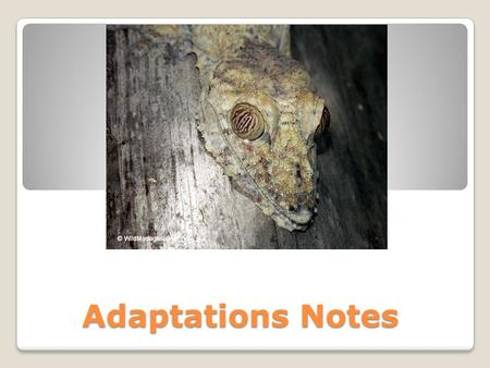 Adaptations Notes. Adaptations Structures, functions, or behaviors that help an organism to survive in its environment and reproduce ◦These can be broken.