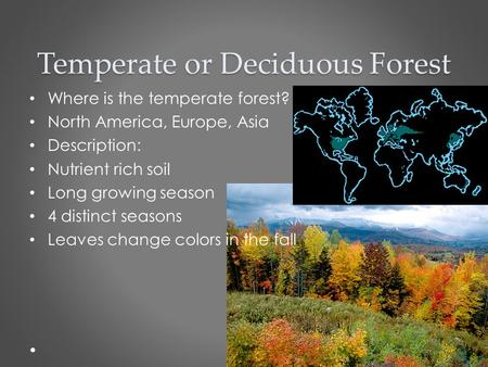 Temperate or Deciduous Forest