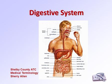 Digestive System Shelby County ATC Medical Terminology Sherry Allen.