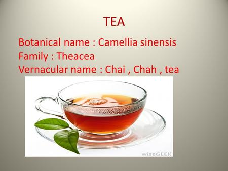 TEA Botanical name : Camellia sinensis Family : Theacea