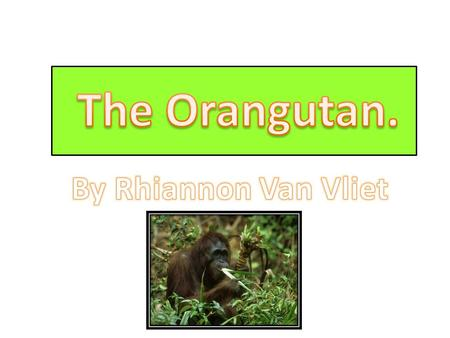 Oran tans are the largest tree-living mammals in the world. There are two types, the Bornean Orang-utan and the Sumatran orang-utan. The Bornean Orang-utan.