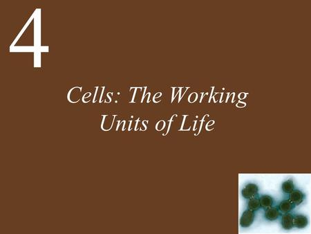 Cells: The Working Units of Life 4. Chapter 4 Cells: The Working Units of Life Key Concepts 4.1 Cells Provide Compartments for Biochemical Reactions 4.2.
