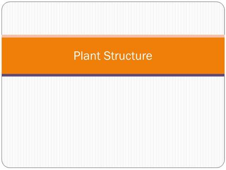 Plant Structure. Hierarchy of a Plant Body Extreme developmental plasticity in plants Structurally change morphology, external form, to better suit environment.