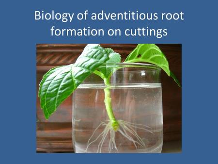 Biology of adventitious root formation on cuttings.