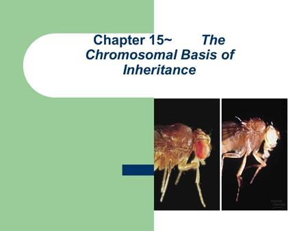 Chapter 15~ The Chromosomal Basis of Inheritance.
