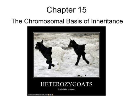 Chapter 15 The Chromosomal Basis of Inheritance. Chromosomal genetics Part I- Sex linkage Part II: Linkage Part III: Chromosomal aberrations.