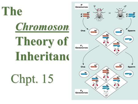 The Chromosome Theory of Inheritance Chpt. 15 Chpt. 15.
