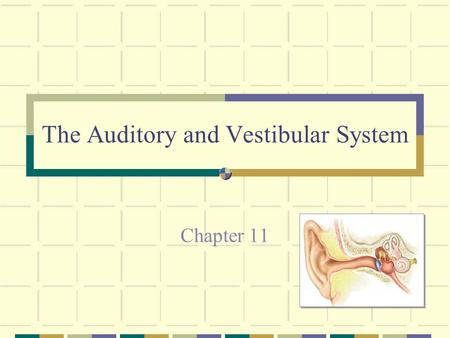The Auditory and Vestibular System Chapter 11. The Auditory and Vestibular System Auditory System - sense of hearing Used to detect sound We are also.