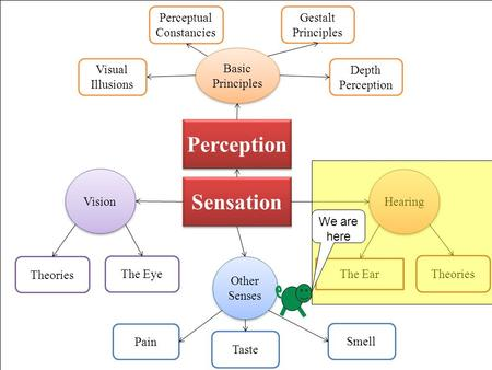 Sensation Vision The Eye Theories Hearing The Ear Theories Other Senses Smell Taste Pain Gestalt Principles Perceptual Constancies Perception Basic Principles.