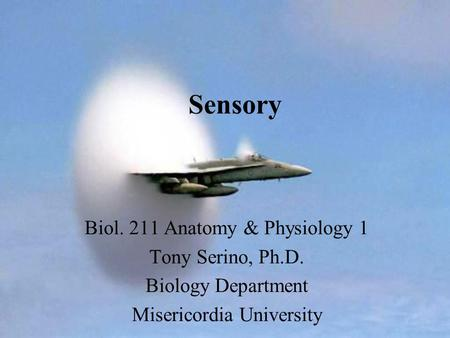 Sensory Biol. 211 Anatomy & Physiology 1 Tony Serino, Ph.D. Biology Department Misericordia University.
