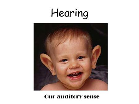 Hearing Our auditory sense. We hear sound WAVES The height of the wave gives us the amplitude of the sound (loudness). Amplitude is measured in Decibels.