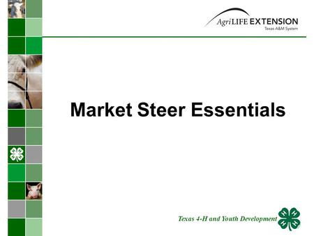 Market Steer Essentials Texas 4-H and Youth Development.