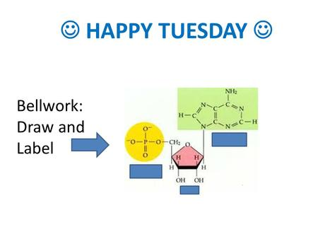HAPPY TUESDAY Bellwork: Draw and Label. Reminders Tomorrow is a PSAT Day (1 st – 4 th will not meet) Notecards will be due on Thursday Test will be next.