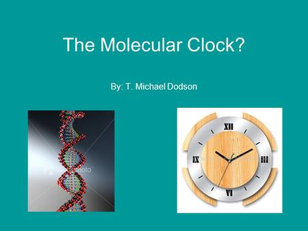 The Molecular Clock? By: T. Michael Dodson. Hypothesis For any given macromolecule (a protein or DNA sequence) the rate of evolution is approximately.