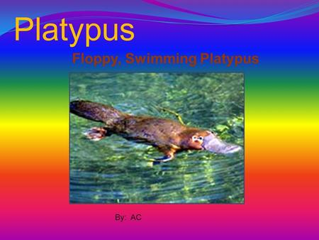 Platypus Floppy, Swimming Platypus By: AC.