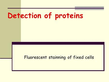 Detection of proteins Fluorescent stainning of fixed cells.