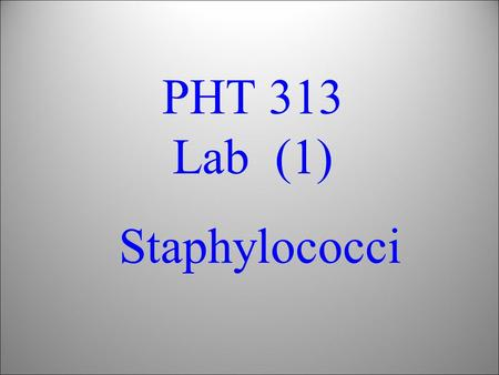 PHT 313 Lab (1) Staphylococci. Bacteria Gram's Stain Gram's +ve Cocci Bacilli Gram's -ve Cocci Bacilli Staphylococci Streptococci Micrococci Neisseria.