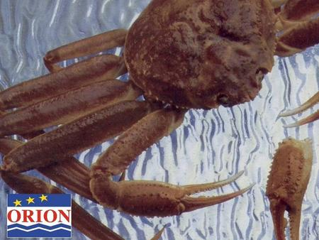 History, Market Analysis and Future Perspective on Snow Crab from the Gulf of St. Lawrence Charles Anastasia Orion Seafood International Inc. January.