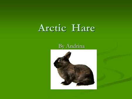Arctic Hare By Andrina Mammal They deliver their babies alive. They deliver their babies alive. They have a backbone. They have a backbone. They have.