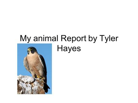 My animal Report by Tyler Hayes. My Animal Report by Tyler Hayes.