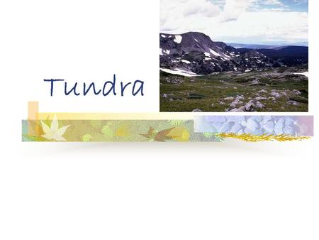 Tundra. A cold biome of the far north; the ground is frozen even in summer There are two seasons in the tundra. They are winter and summer.