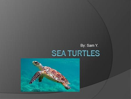 By: Sam Y.. Introduction  People that that the shell of a sea turtle is just like a crab but it's archly part of the body. Sea turtles are millions of.