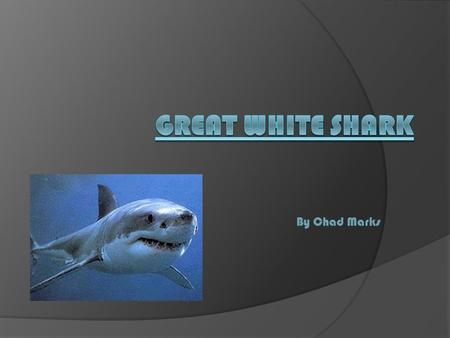 By Chad Marks. Introduction Did you know Great White Sharks have razor sharp teeth? When you're done reading this piece you could right a story about.