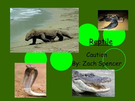 Reptile Caution By: Zach Spencer. Lizards Biggest: Komodo Dragon Smallest: Tokay Gecko Poisonous: Gila Monster Safest: Leopard Gecko Fun Facts: Lizards.