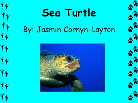 Sea Turtle By: Jasmin Cornyn-Layton. Description A sea turtle is a reptile. It has black flippers with claws. They have strong jaws. The top of the shell.