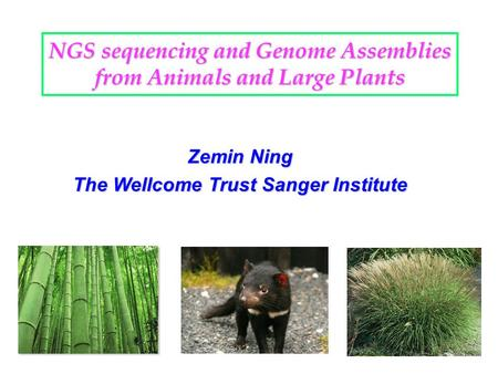 NGS sequencing and Genome Assemblies from Animals and Large Plants Zemin Ning The Wellcome Trust Sanger Institute.