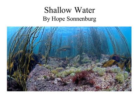 Shallow Water By Hope Sonnenburg. Marine Life In shallow water you can find many different types of marine life.