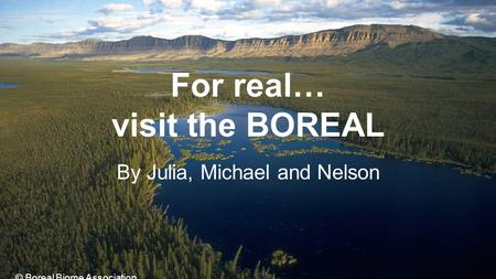 For real… visit the BOREAL By Julia, Michael and Nelson © Boreal Biome Association.