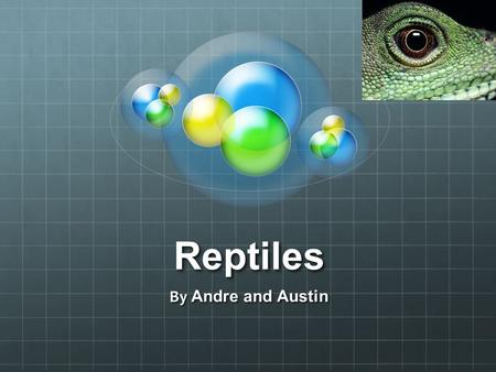 Reptiles By Andre and Austin. Reptilians Today we will talk about reptiles ( reptilians.) Other people, like scientists, call them reptilian.