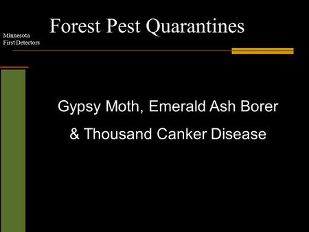 Minnesota First Detectors Forest Pest Quarantines Gypsy Moth, Emerald Ash Borer & Thousand Canker Disease.