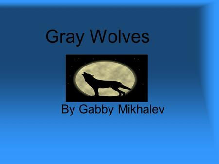 Gray Wolves By Gabby Mikhalev. Introduction Wolves, wolves, wolves. Have you ever seen a gray wolf? Wolves are very close to the dog family. I'm going.