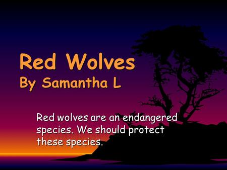 Red Wolves By Samantha L Red wolves are an endangered species. We should protect these species.