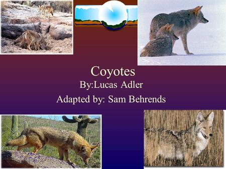 Coyotes By:Lucas Adler Adapted by: Sam Behrends. The Coyote  Grayish brown to grayish yellow on upper parts  Throat and belly are whitish.  The forelegs,