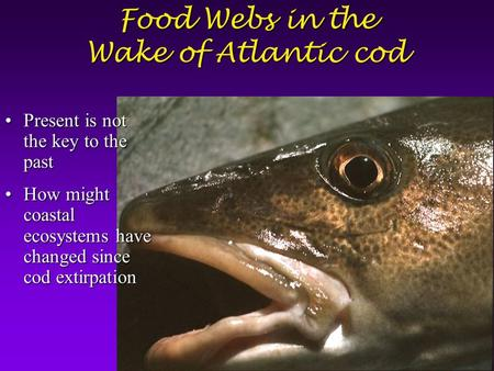 Food Webs in the Wake of Atlantic cod Present is not the key to the pastPresent is not the key to the past How might coastal ecosystems have changed since.