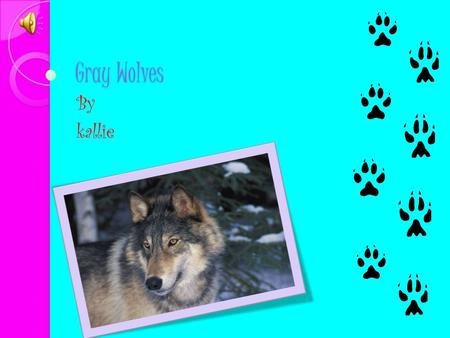 Gray Wolves By kallie Physical Characteristics height: 26-38 inches (at shoulder) Length: 4.5-6.5 feet (nose to end of tail) Weight: 55-175 lbs Lifespan: