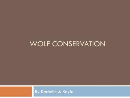 WOLF CONSERVATION By Kachelle & Kayla. The Endangered Species Act The Endangered Species Act provides protection for the organisms placed on the endangered.