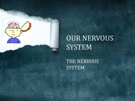 OUR NERVOUS SYSTEM THE NERVOUS SYSTEM The nervous system is made up of the brain, spinal cord, and nerves. Nervous system is our body's most important.